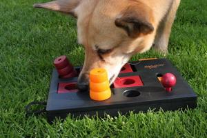 zabawy węchowe, nosework, brainwork, zabawa z psem
